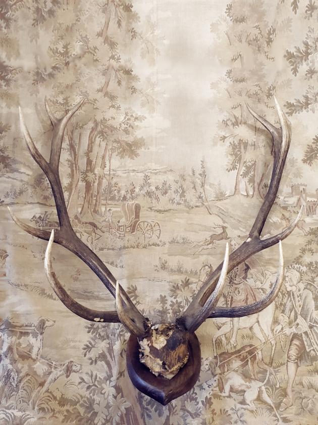 1900年代<br>英國鹿角標本 1