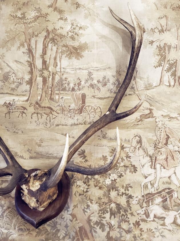 1900年代<br>英國鹿角標本 2