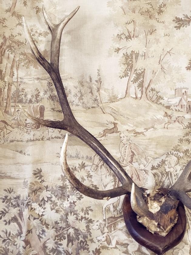 1900年代<br>英國鹿角標本 3